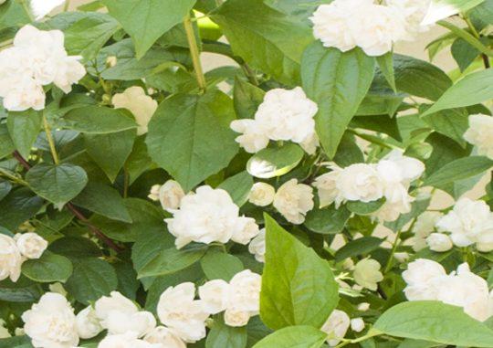 Цветы ресторана «Александровский»
